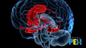 Quel est l'effet d'un stress intense sur le cerveau de l'enfant ?